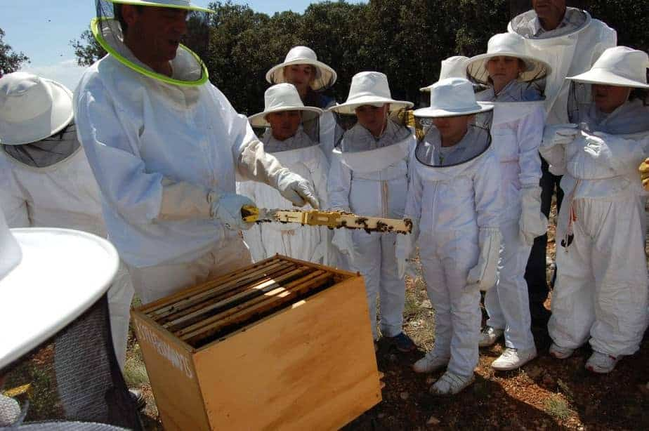 Visita de escolares al apiario de Ecocolmena