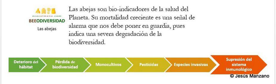 Abejas y Biodiversidad - Beeodiversidad 5