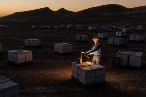Bret Adee abre una colmena en Lost Hills, California, zona con las mayores operaciones comerciales de miel del mundo. PHOTOGRAPH BY ANAND VARMA, NATIONAL GEOGRAPHIC