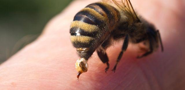veneno de abeja apitoxina