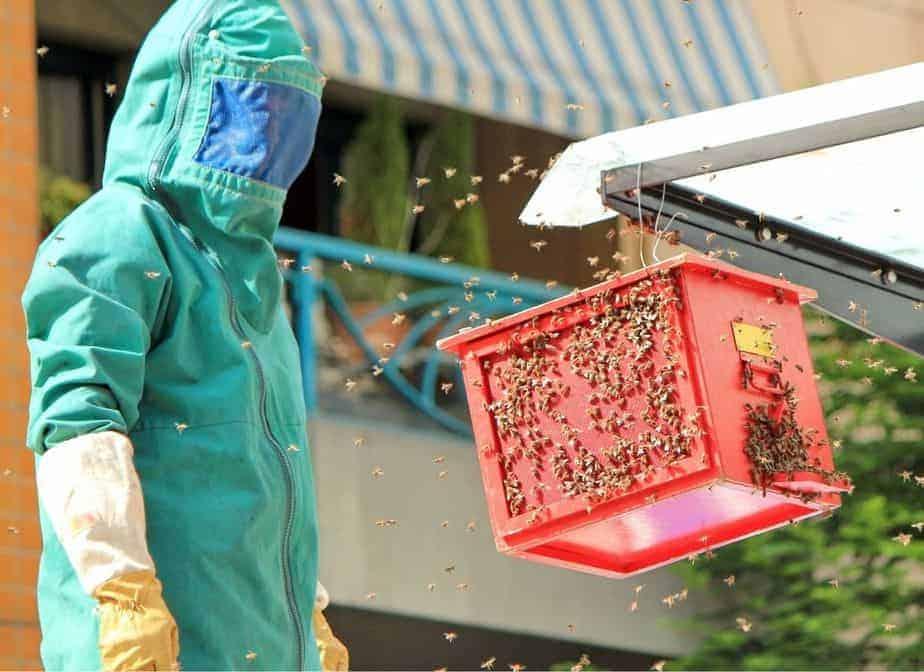 abejas ubicadas en una azotea en al ciudad apicultura urbana