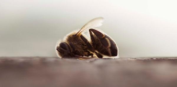 La ciencia confirma que los insecticidas neonicotinoides dañan a las abejas
