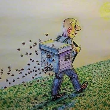 Lo que las abejas me enseñaron